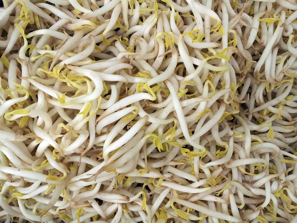 Growing Bean Sprouts Grown