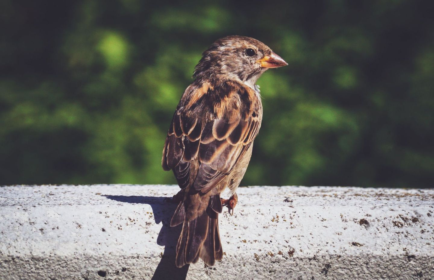 The Ingenuity of a Sparrow