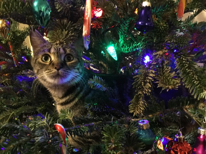 holiday hazards for pets Christmas tree cat