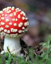 Anti Fungal Natural Cream