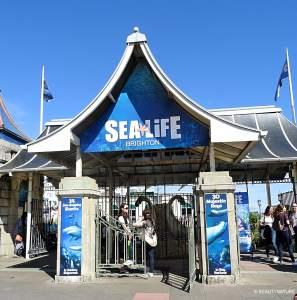 Brighton sealife