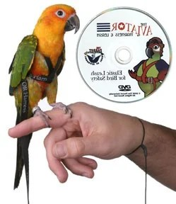 Aviator Harness The Safest And Easiest Bird Leash Ever Made