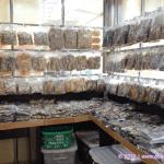 Dried Fish – Souveneir Shop