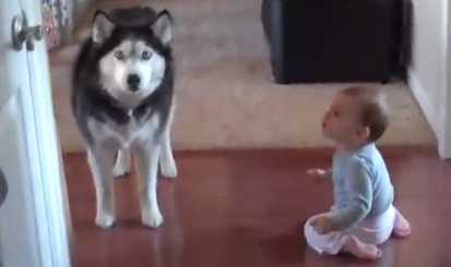 cao a falar com bebe