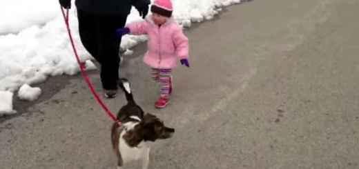 bebe rindo muito a passear cachorro