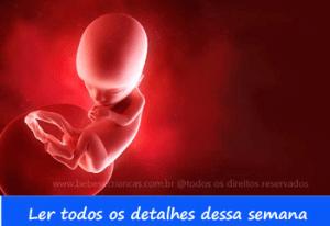 A formação do bebê semana a semana - 13 semanas de gravidez - Acompanhe sua gravidez semana a semana