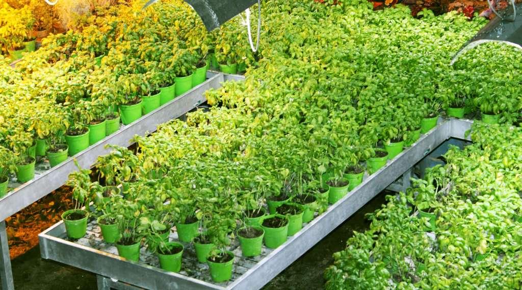 Napoli-sotterranea-particolare-piante