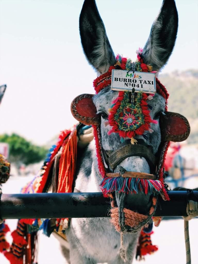 anno nuovo mexico