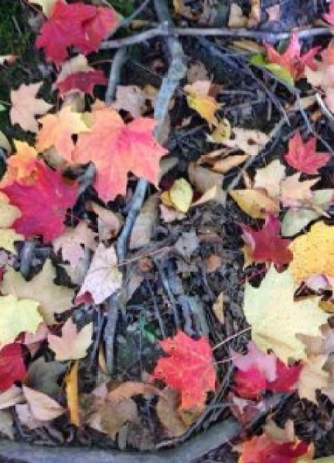 Autumn leaves are now falling