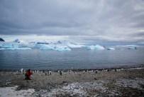 Besuch einer Pinguin-Kolonie