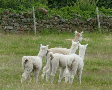 solstice and cria