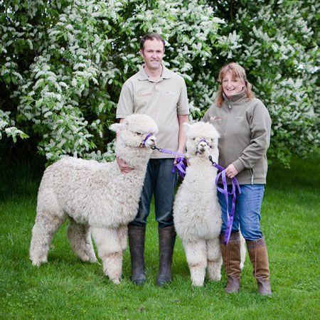 Beck Brow Alpaca Experience