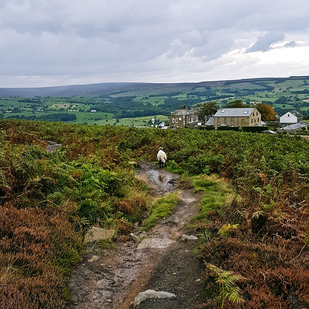 A sheep on Ilkley Moor - September Monthly Recap by BeckyBecky Blogs