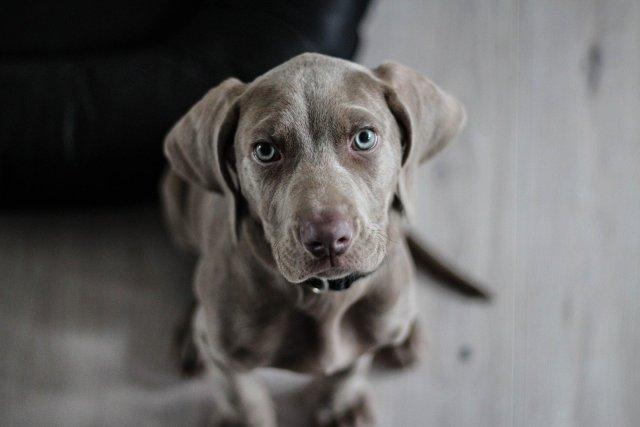 cucciolo di cane ben accetto al B&B il Casale