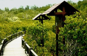 Mangrove Pranburi Park Reserve