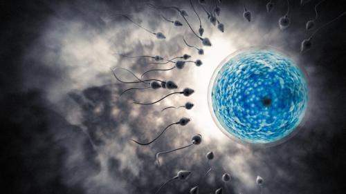 fertilité et douche froide