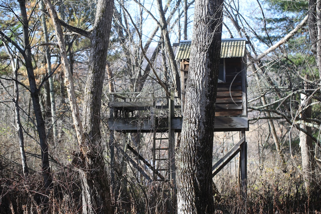 The Tree House In The Woods Bedlam Farm Journal Bedlam