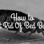 How To Get Rid Of Bed Bugs in Easy Way
