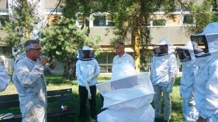 Bee Abeille ruches en entreprise - ATOS Bull