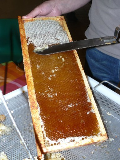 Bee abeille extraction du miel