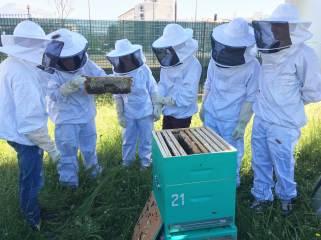 Bee Abeille ruches en entreprise - SAMSE