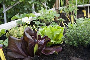 Urbanes Gärtnern