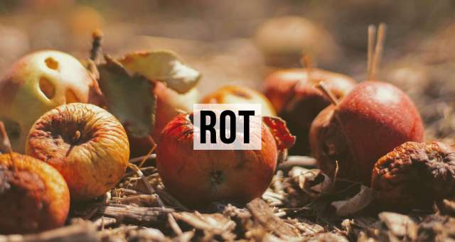 rotted-apple