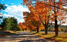 Autumn Wallpapers (8)