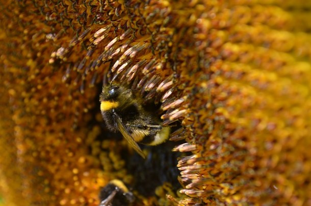 What is Bee Pollen 2