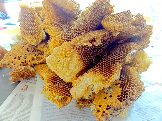A haul of beeswax comb. Honeybees had made their home in a plastic composter and needed removing. The honeybees were given a new home and the beeswax they left behind was put to a good use. #BeehiveYourself, #WantageHoney, #Beeswax, Beehive Yourself, Wantage Honey,