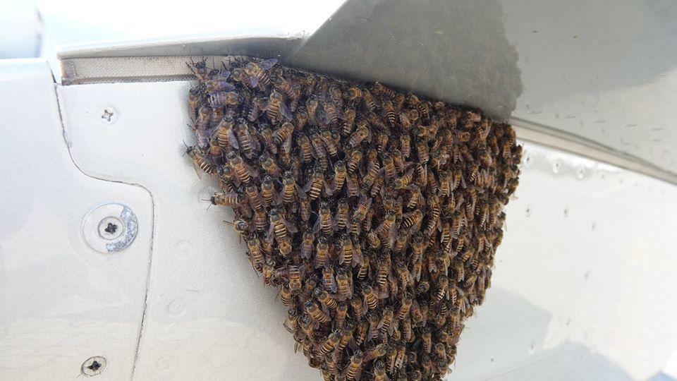 Swarming Bees in Kuala Lumpur airport / copyright Beelistener.co.uk