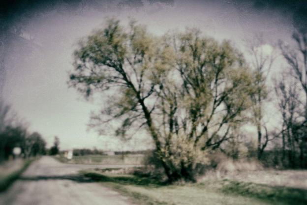 Old Fashioned Tree (Pinhole)