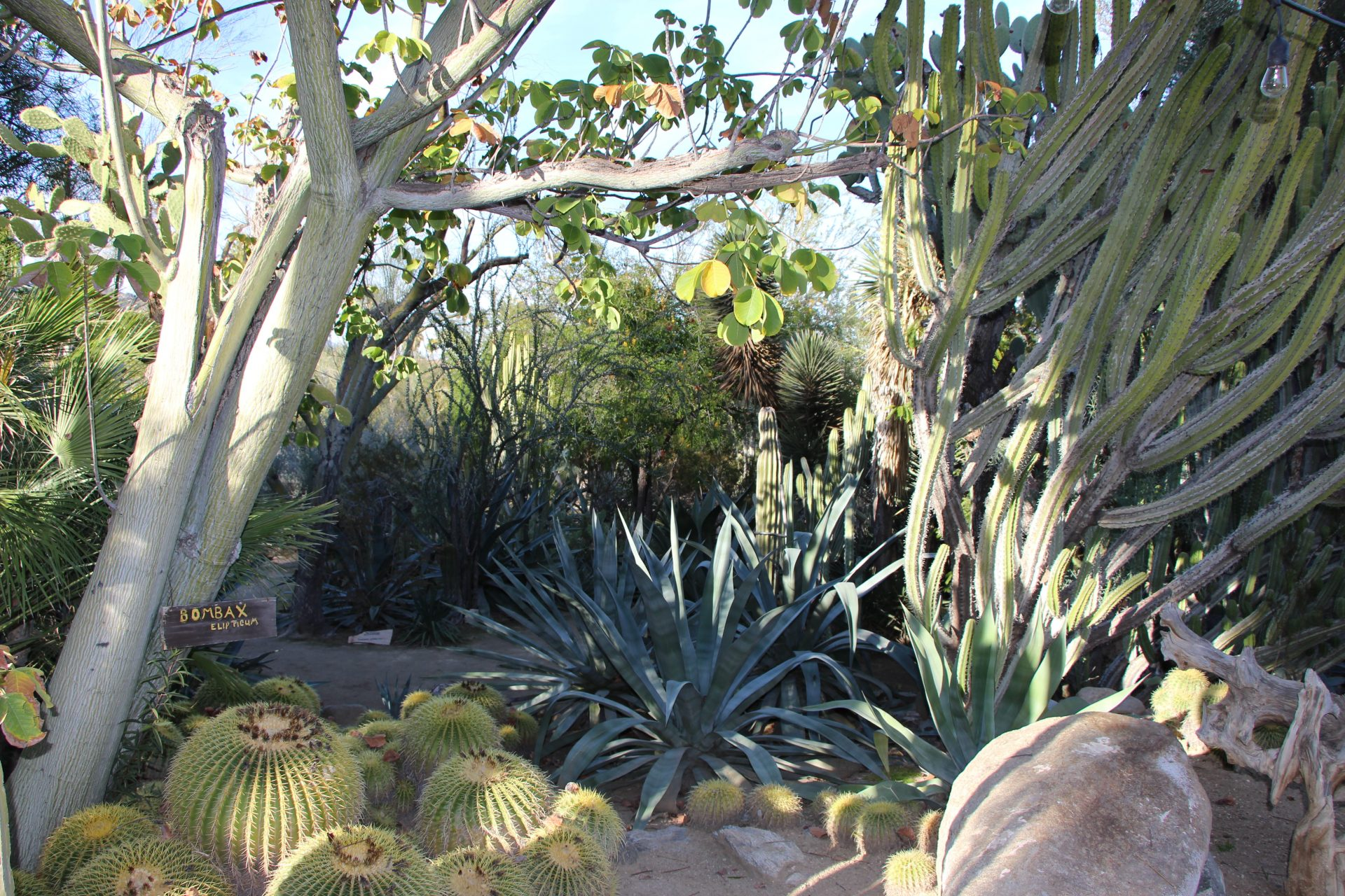 Been There Done That Trips | Moorten Botanical Gardens And Cactarium: Palm  Springs, CA