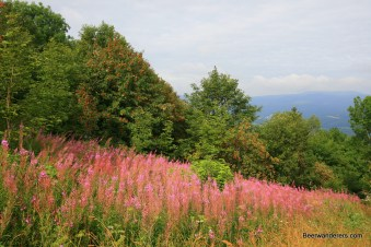 flowers on hill