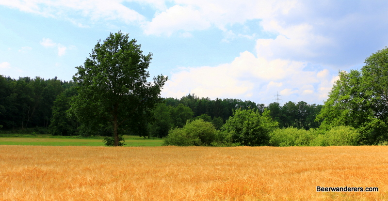 field with tree