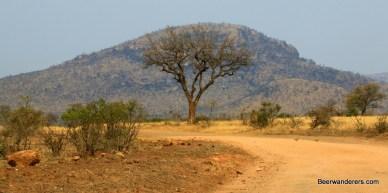 kruger tree landscape