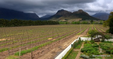 vineyard_mountains