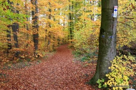 foliage trail