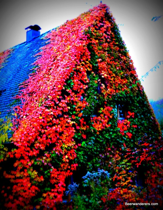 color leaves on house