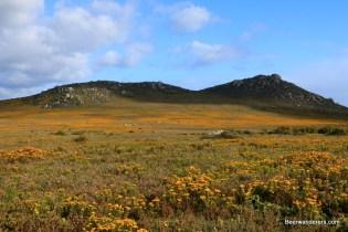 mountains wildflowers