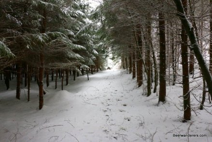 snowy trail with low trees