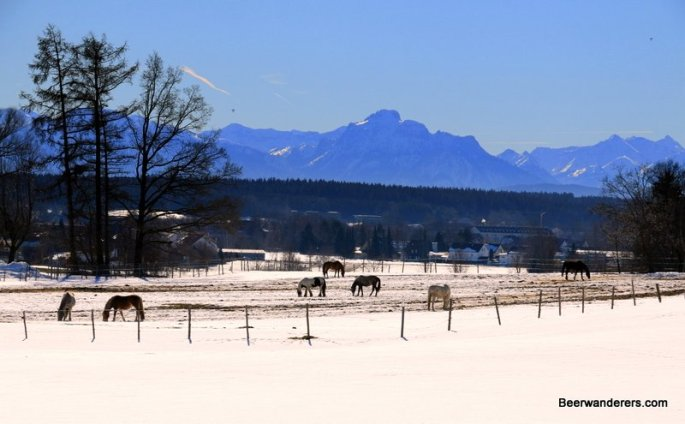 alps with horses