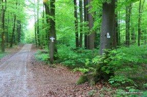 lush trail