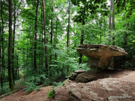 rock formation in forest
