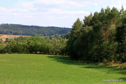 large open area with trees