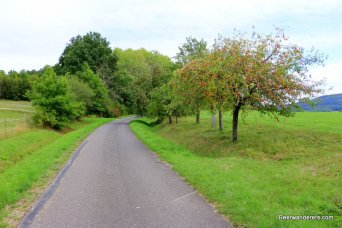 farm road with apple trees