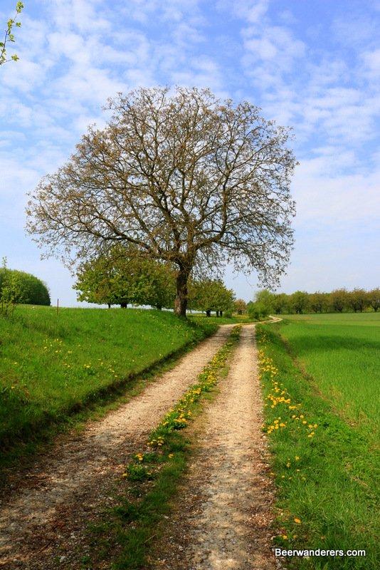 tree on farm road