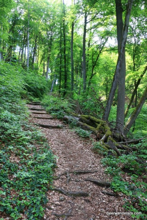 steep lush forest trail