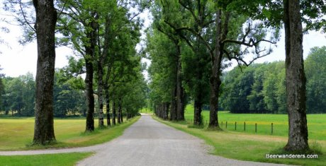 small road lined with trees