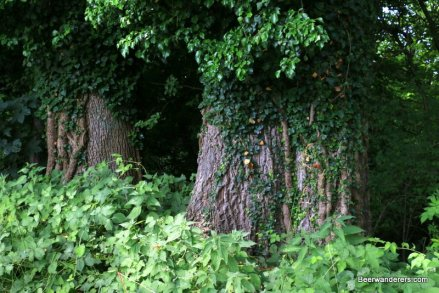 large old trees